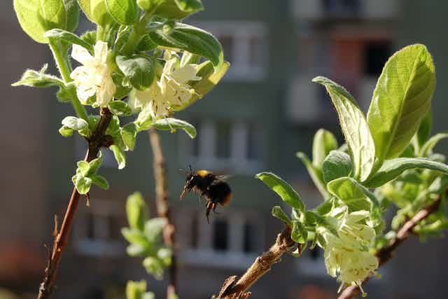Bee and flowers with city buildings in background