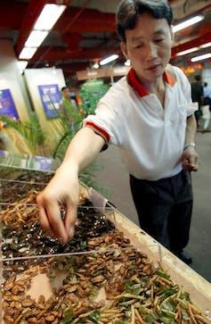 Un homme attrape des insectes destinés à la consommation sur un stand de marché.