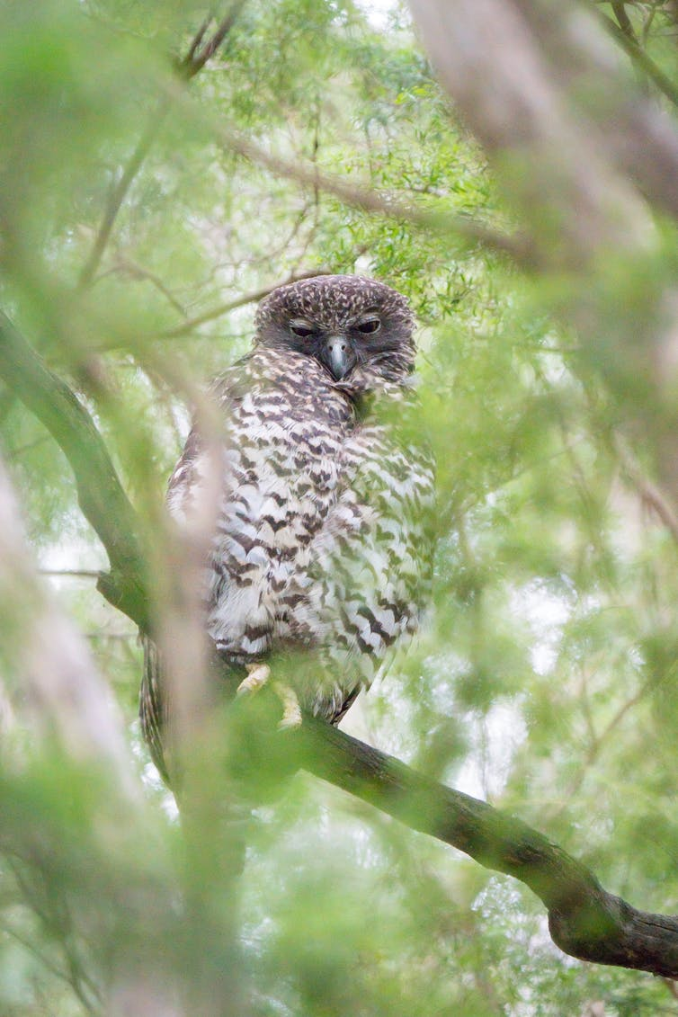 A powerful owl surrounded by leaves
