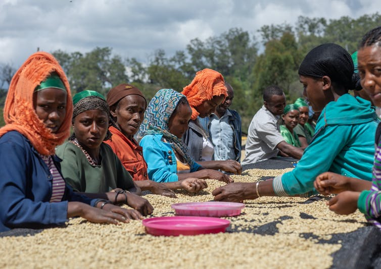 Women sitting around a table filled with coffee beans.