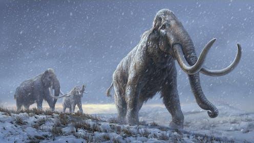 Dibujo de tres mamuts esteparios