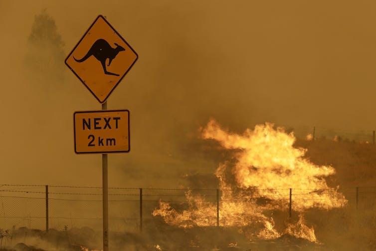 Fire burning near a road sign warning of kangaroos.