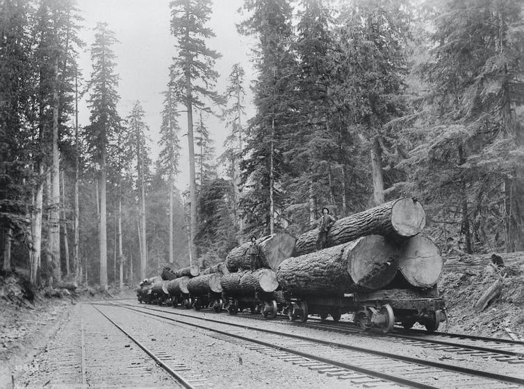 Flatbed rail cars stacked with large cut logs.