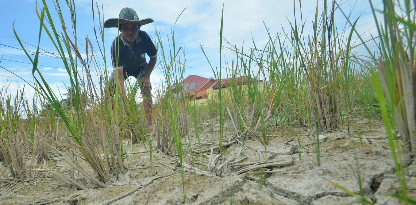 Studi ungkap bagaimana petani Indonesia mampu beradaptasi hadapi krisis iklim