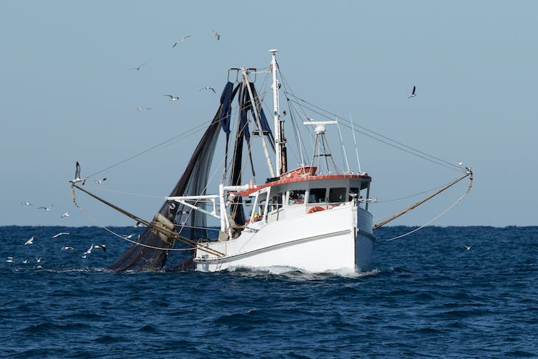 Fishing trawler at sea, surrounded by gulls