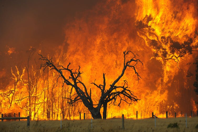 A tree is shown as fire engulfs the landscape behind it.