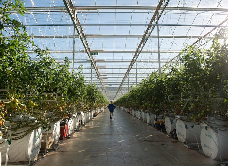 Worker walks through greenhouse