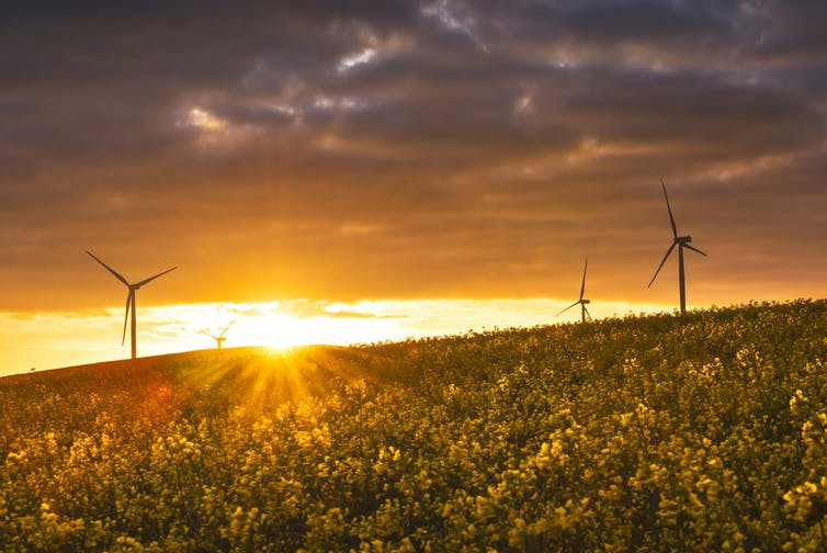 Sunlight over a wind farm with canola flowers in bloom.