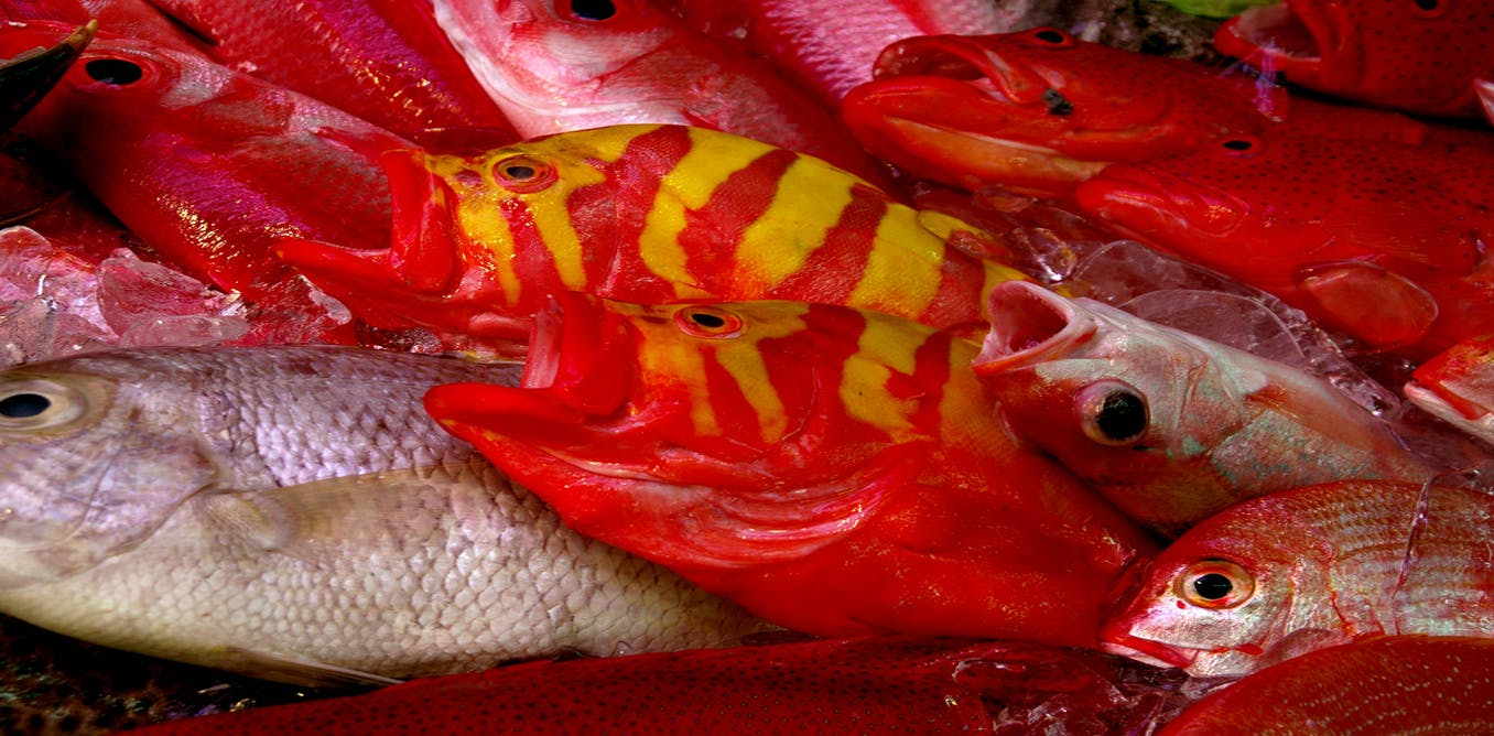 Explainer what is ciguatera fish poisoning for Ciguatera fish poisoning