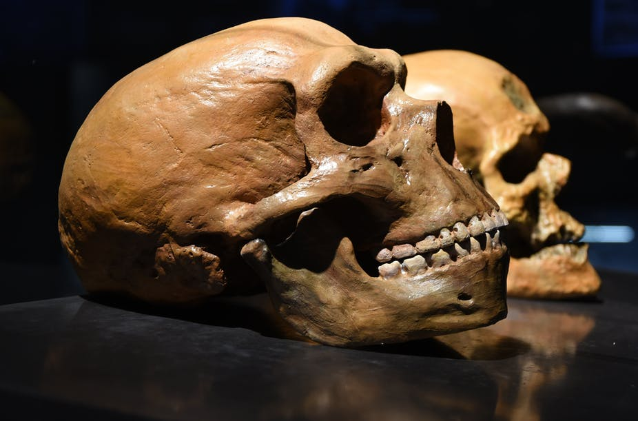 Image of a Neanderthal and human brain.