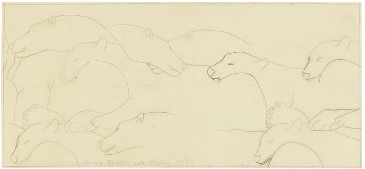 pencil drawings of polar bears