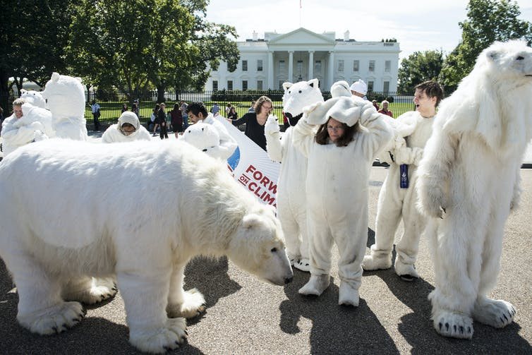 Activists in polar bear costumes outside the White House
