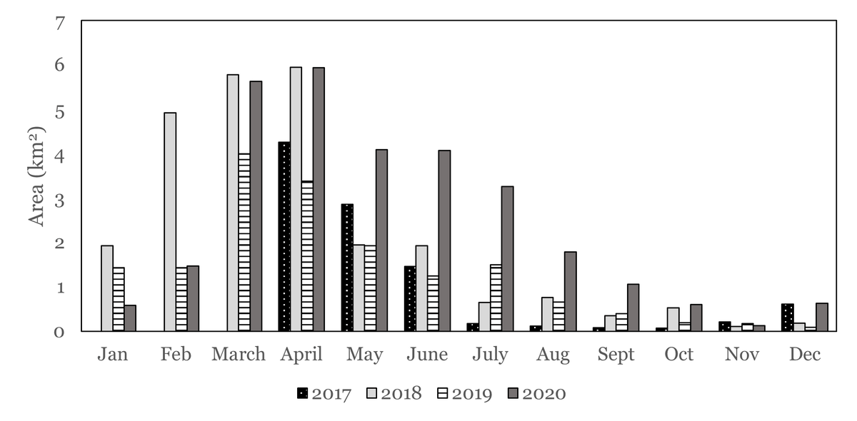 Area under seaweed production from May to August 2020 was significantly higher than in previous years.