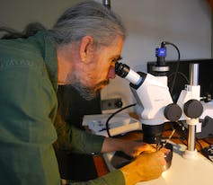 A man in a green shirt looks into a microscope