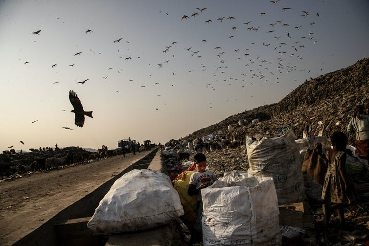 Birds fly over landfill site