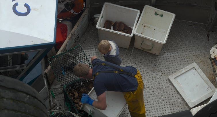 A fishermen and a young boy sort catches on the deck of a fishing boat.