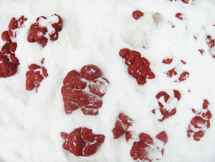 Instalación. Estatuillas en pasta de sal pintadas en rojo, implantadas en sal marina.