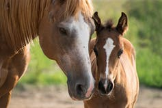 A mare and her foal.