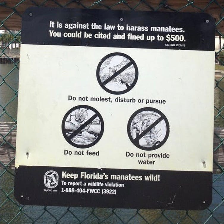 A sign telling people not to harrass manatees