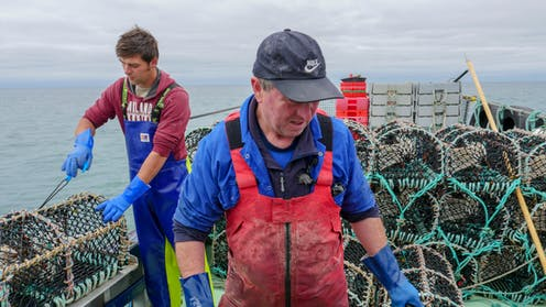Two fishermen tend lobster traps on a boat.