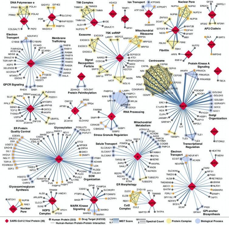 A map showing proteins connections.