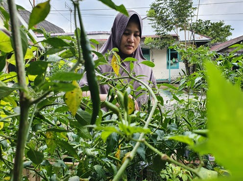 Migrant woman tends to garden