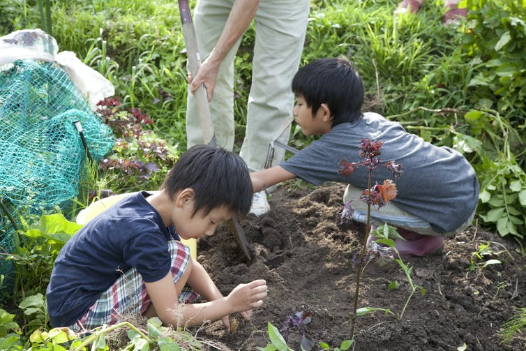 Young boys helping in garden