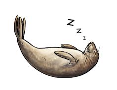 A seal floating asleep.