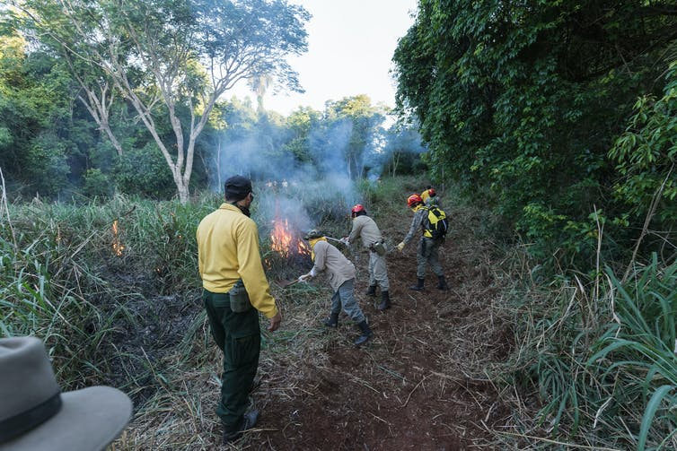 Rangers managing forest with fire.