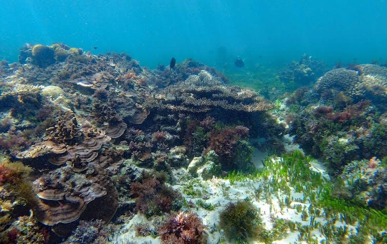 Healthy brown coral garden