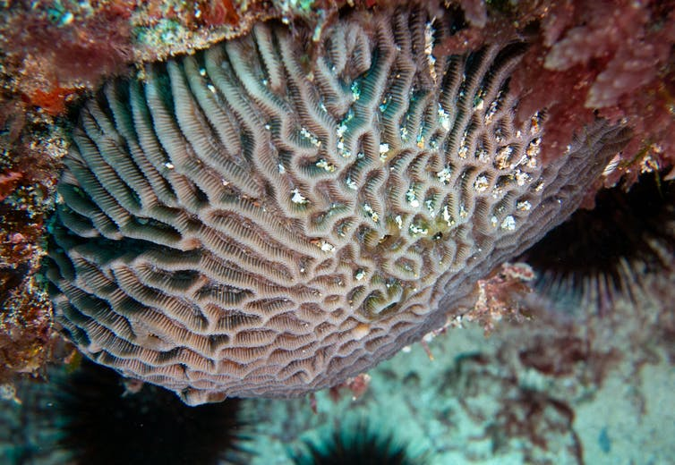 Close-up of white, wrinkly coral