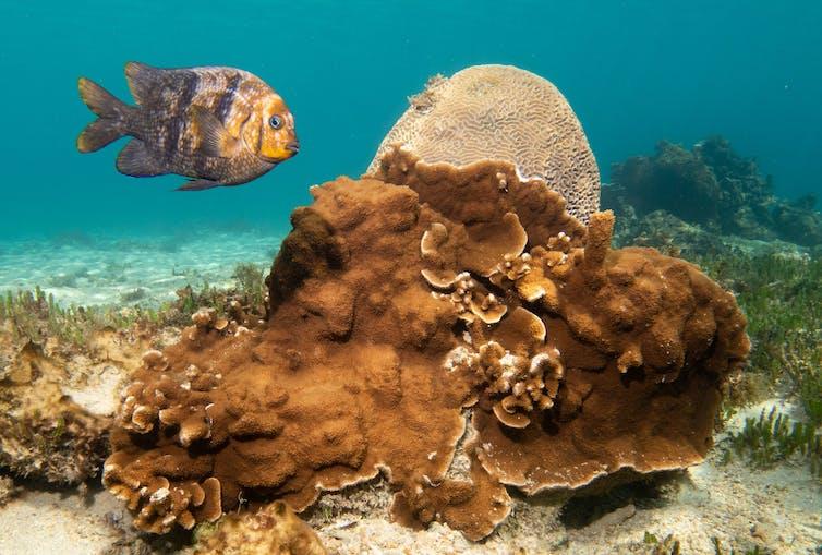 An orange fish near a mound of orange coral