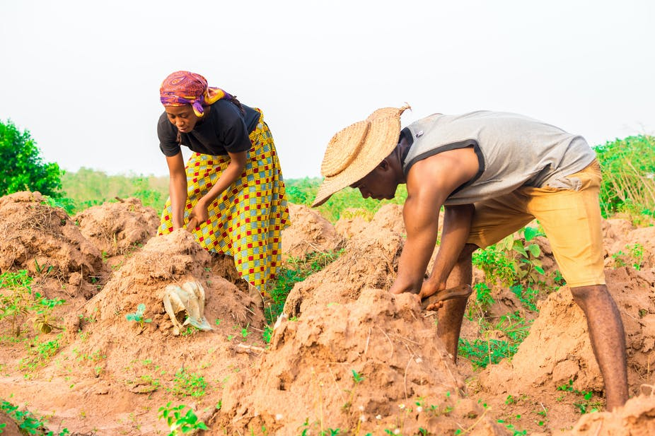 Man and woman tilling soil in a farmland,