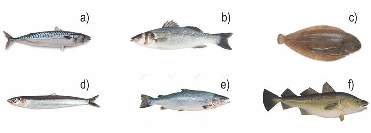 Six images of fish commonly eaten in Europe.