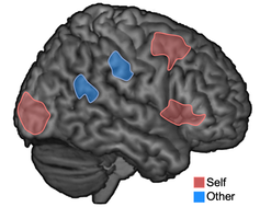 brain with different areas highlighted for 'self' and 'others'