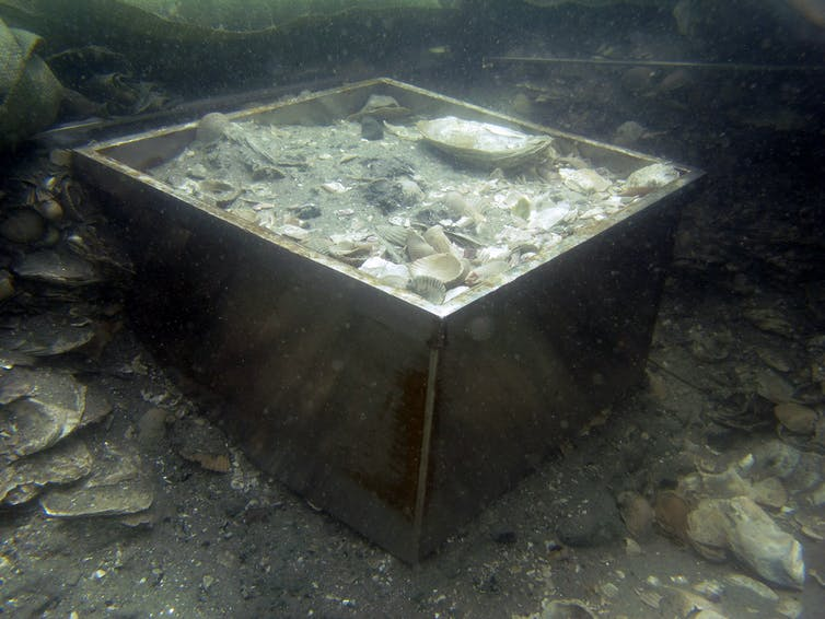 Box core