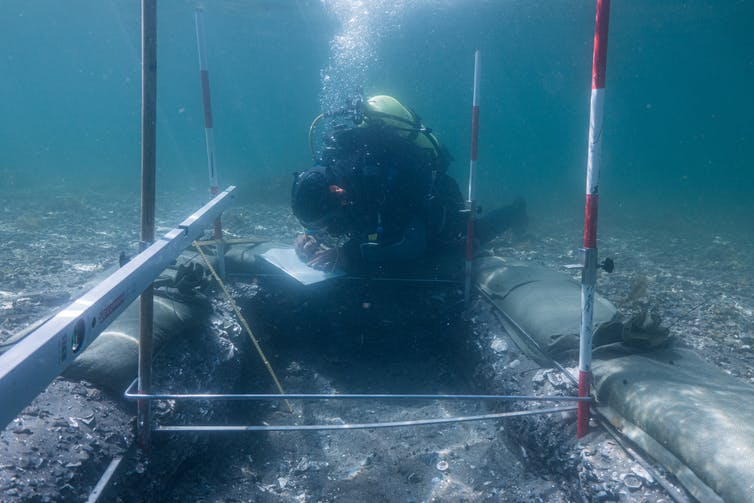 Underwater archaeologist excavating a shell midden