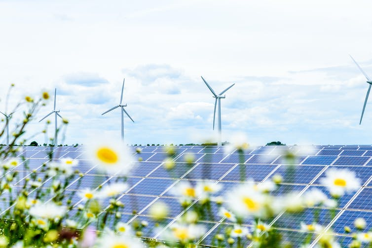 A row of solar panels obscured by daisies, with wind turbines in the background.