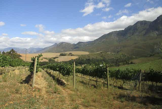 Lismore Estate, Greyton, South Africa.
