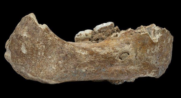 Denisovan jaw fossil.