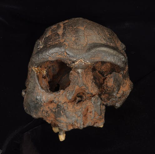 A Homo erectus skull from Java, Indonesia