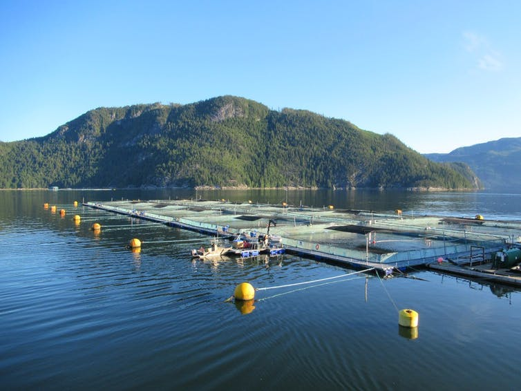 Floating salmon pens off Canadian coast.