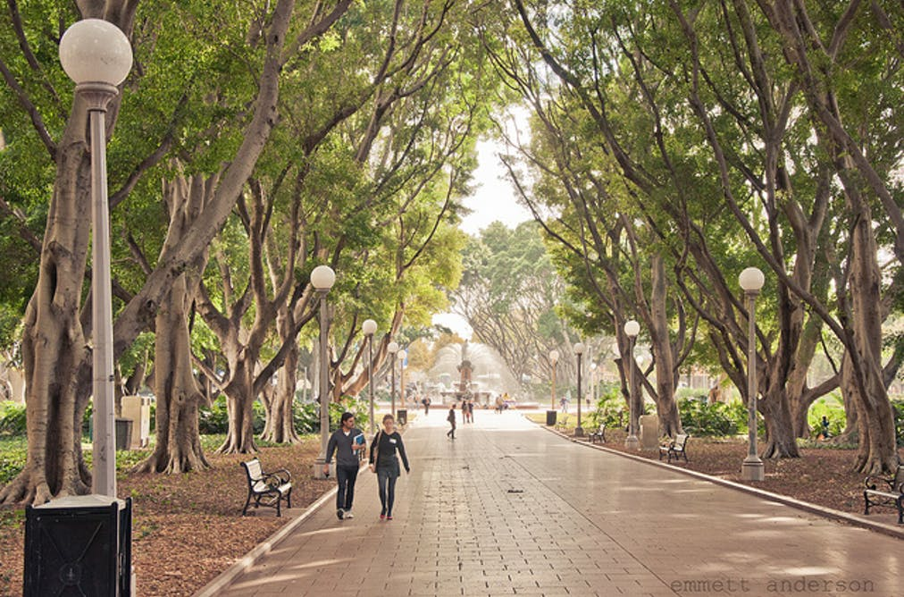Can Trees Really Cool Our Cities Down