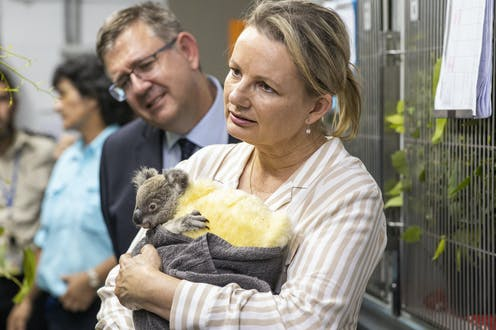 Sussan Ley holding a baby koala