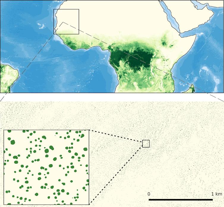 Supercalculateur, apprentissage automatique, données satellitaires et évaluations sur le terrain permettent de cartographier des milliards d'arbres individuels en Afrique occidentale. Martin Brandt, Author provided