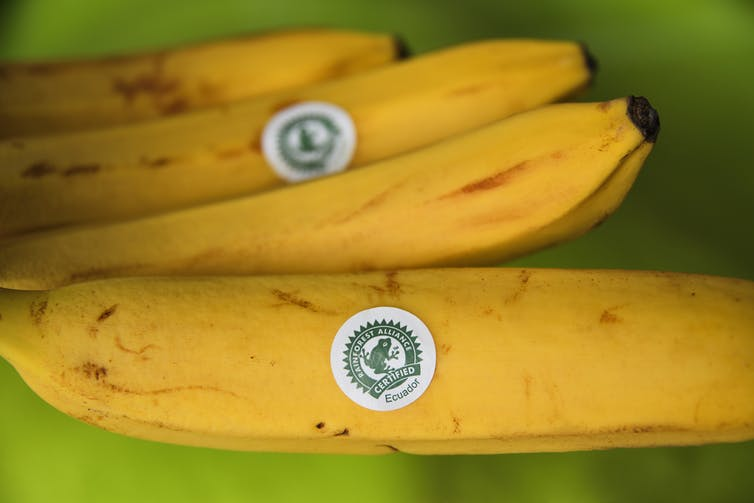 A banana with a white label depicting the Rainforest Alliance logo of a green frog.
