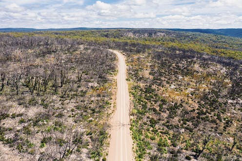 Road through recovering bushland