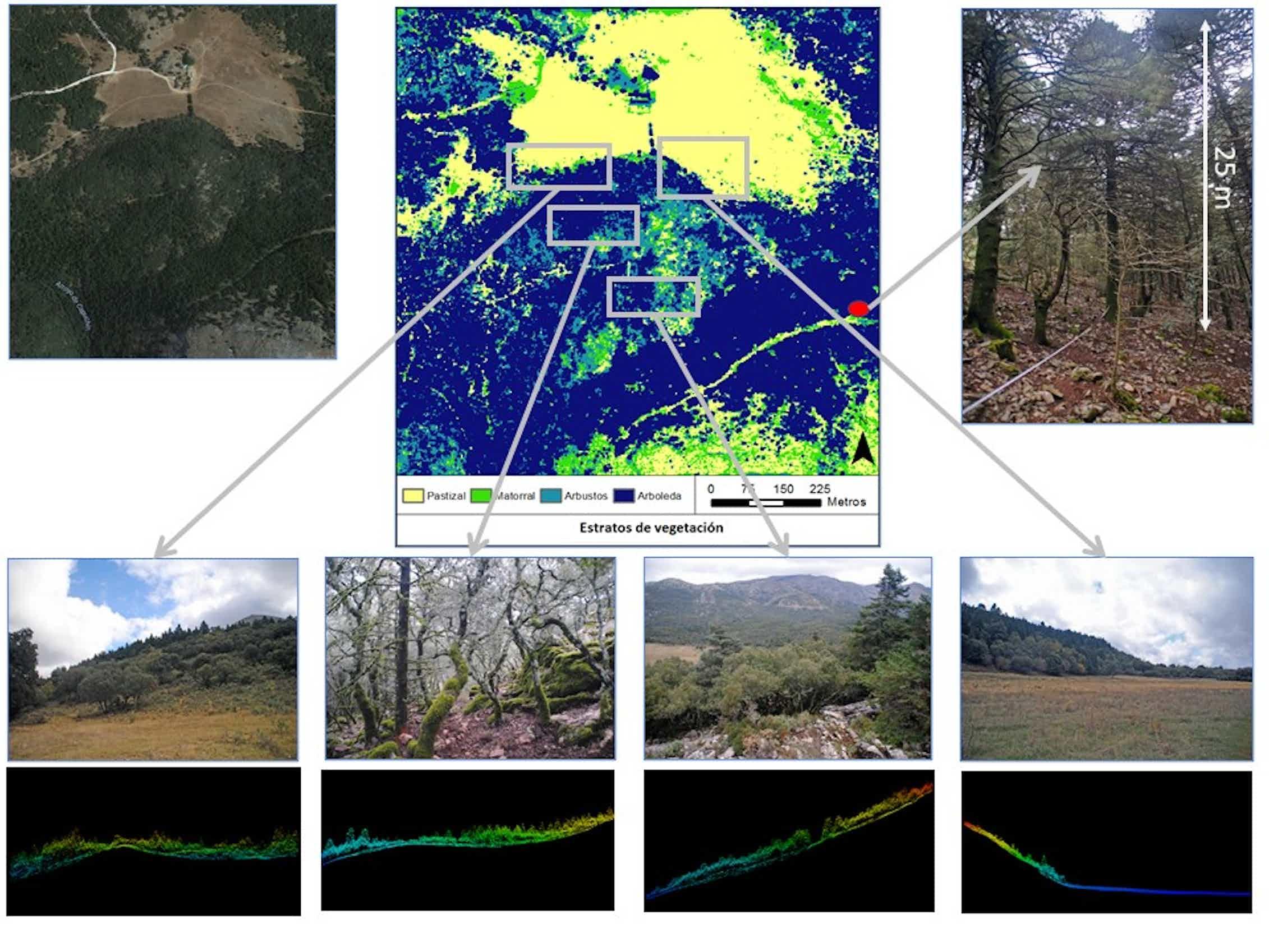Estudio a escala de paisaje de un pinsapar mediante nube de puntos lidar. A la derecha localización del ejemplar de mayor altura.Álvaro Cortés Molino,Author provided