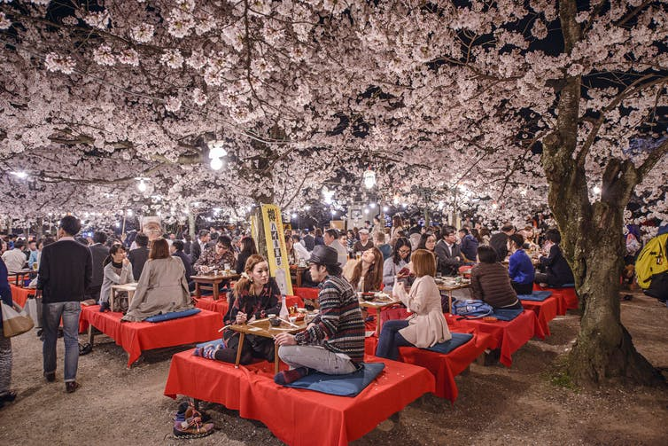 People eat beneath cherry blossoms in Tokyo.