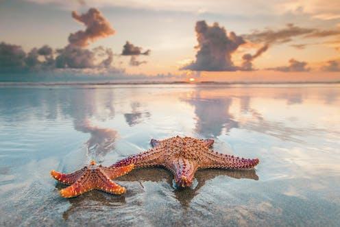 Image of starfish on a beach.